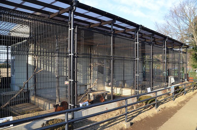 市川にはレッサーパンダ舎が1号舎から4号舎までありますが、現在、3号舎はレッサーパンダ舎ではなくキツネザル舎となっています。  動物園のHPによると、この4号舎は