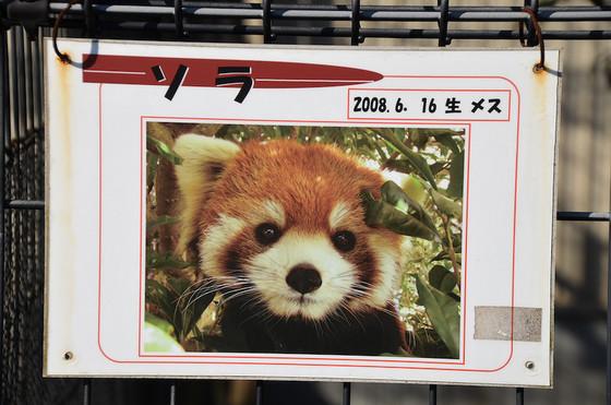 2008年生まれのソラ。 とくしま動物園のソラ(こっちはオス)と同じ名前だなぁと前から思ってたんですが、なんと生年月日まで全く同じ(!)でした。